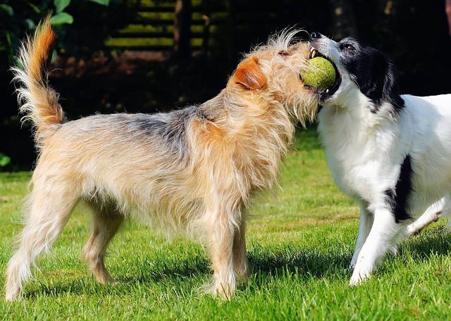 las reglas del parque para perros