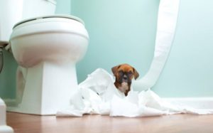 8 Weird Things Dogs Do When They Poop