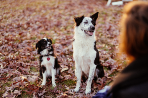 6 Indicators Your Canine Trusts You With His Life