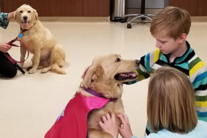 Canine Recieves Kidney From One Of Her Pups In Uncommon Transplant Surgical procedure