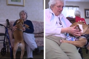 Bulldog Pet Spreads Happiness To Seniors With Alzheimer's Illness