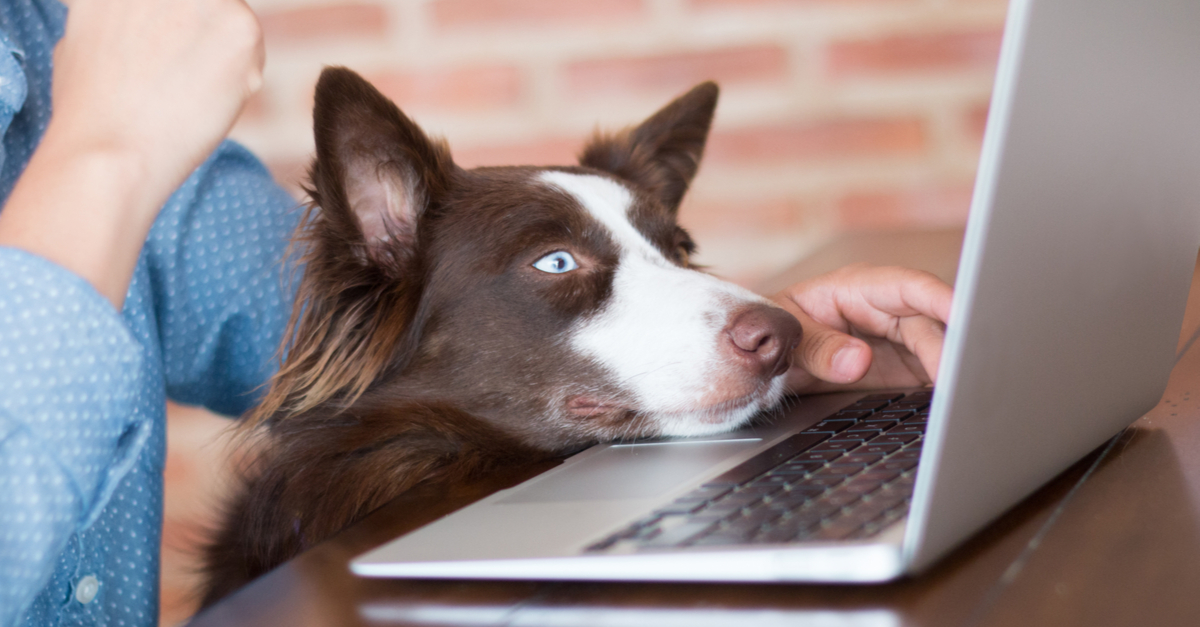 10 Black Friday Deals Your Dog Wants You to Click On!