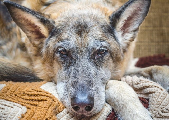 hospice care for dogs