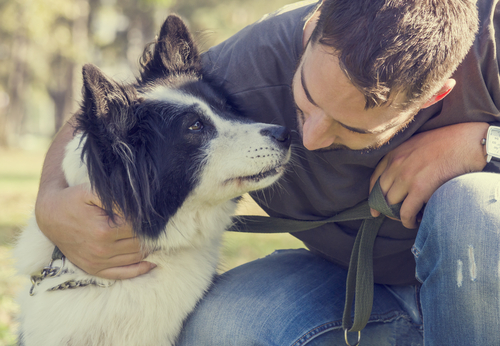 what is hospice care for dogs