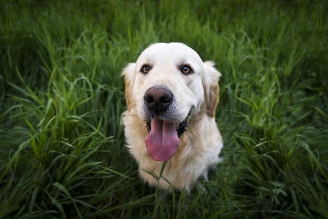dog health myth - eat grass