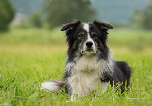 longest living dogs