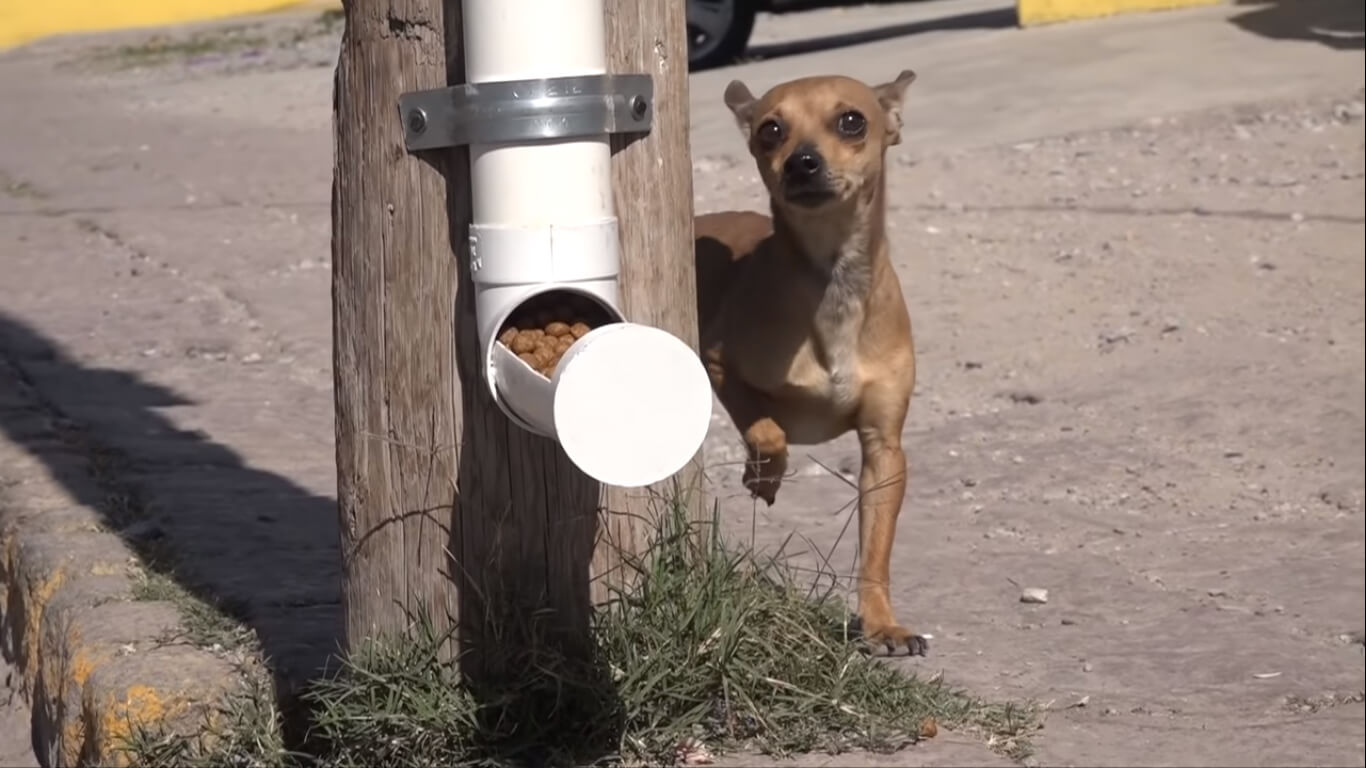 City Introduces Programs To Make Life Better For Street Dogs