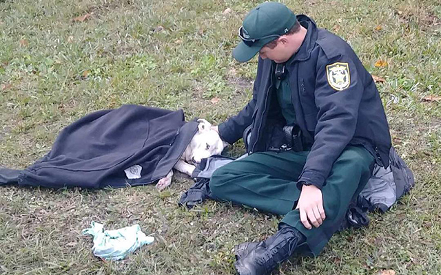 Deputy's Small Act Of Kindness Makes A Difference For Injured Dog