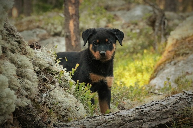 top male dog names
