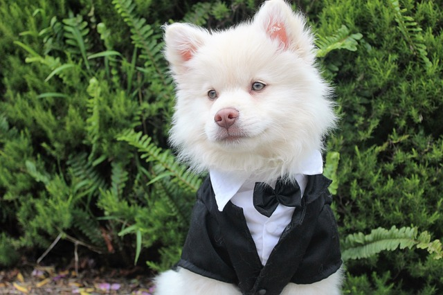 richest dogs in the world