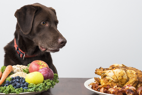 dog parents understand nutrition