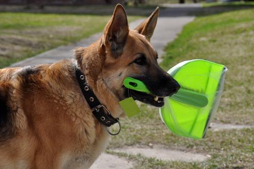 dog parents understand compromise