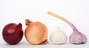 onion garlic leeks