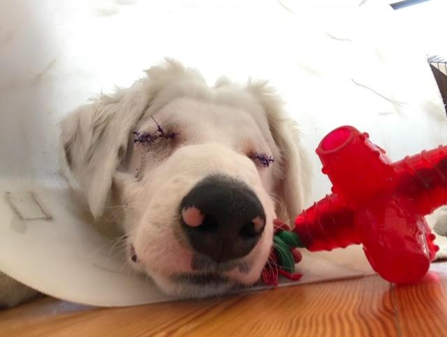 Deaf Blind Dog S Incredible Spirit