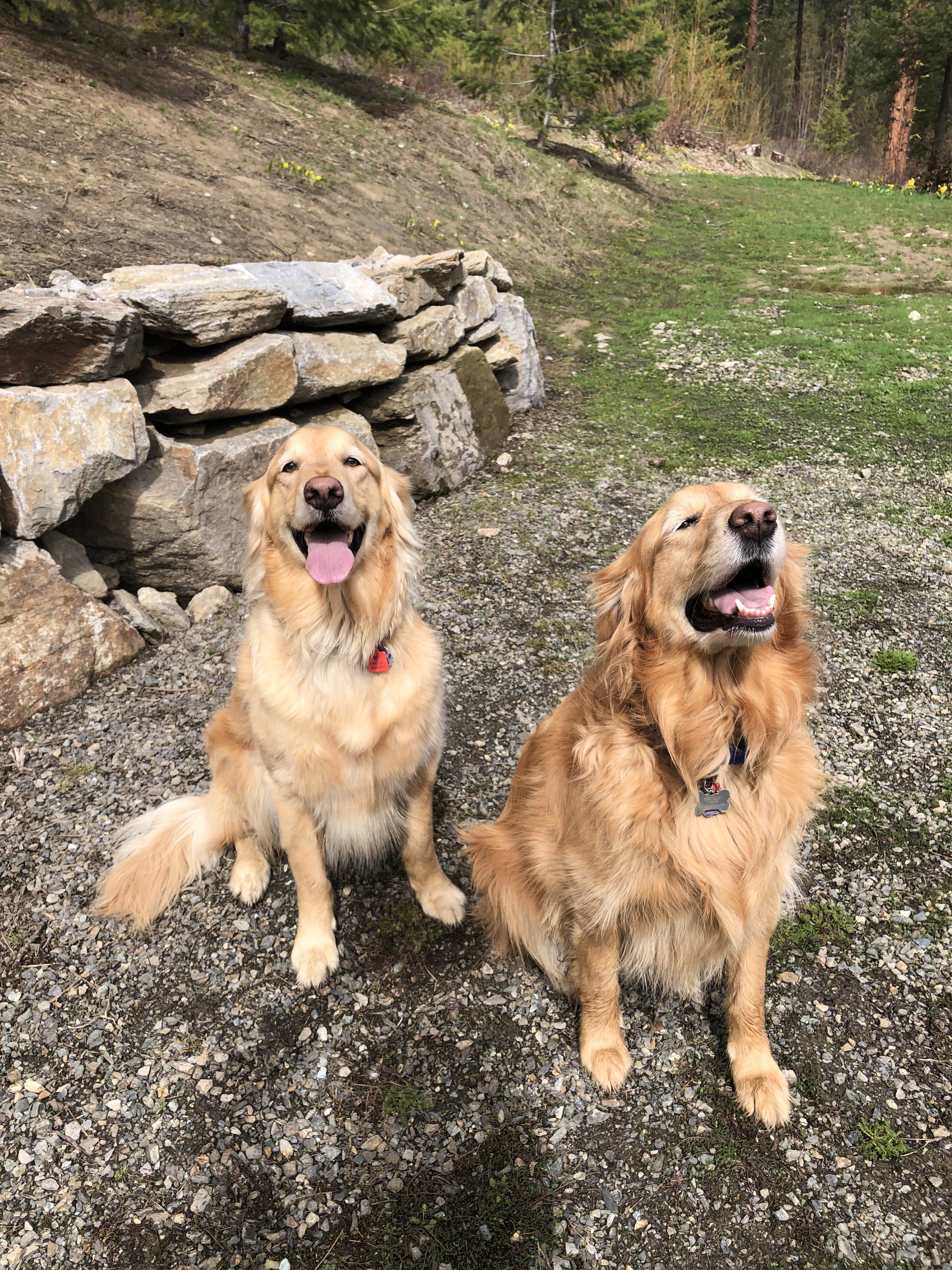 "I Switched My Dogs From ""Healthy"" Kibble to Fresh Food For 30 Days To See What The Hype Was About – Here's What Happened"