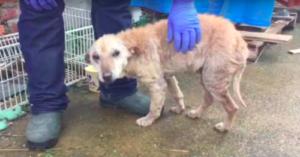 Dog named Emu rescued