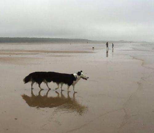 Panorama Dog 1