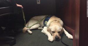 Police Dog Raider