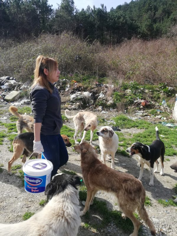 Sebahat supplies the homeless pups with food, water, and shelter on a daily basis. (Photo by Sebahat Hanifeoglu)