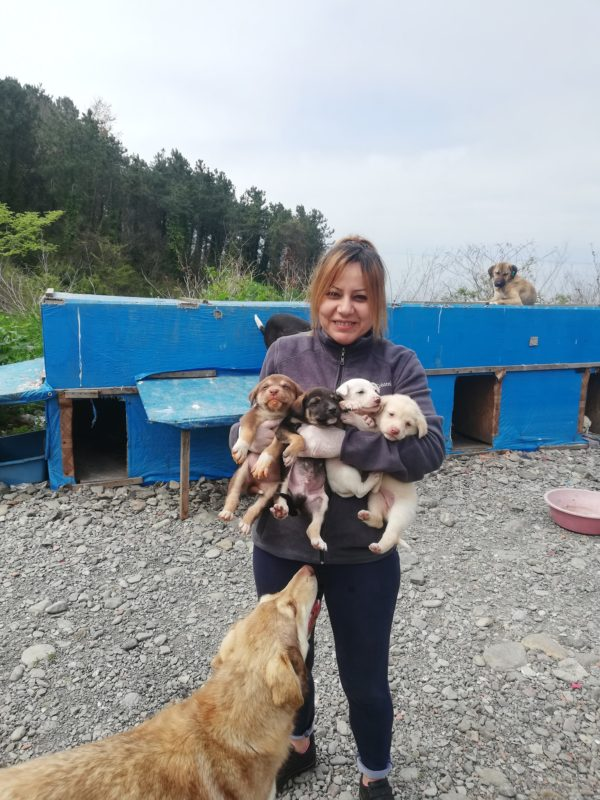 With the help of some volunteer friends, Sebahat builds sheds for the pups to sleep in. (Photo by Sebahat Hanifeoglu)