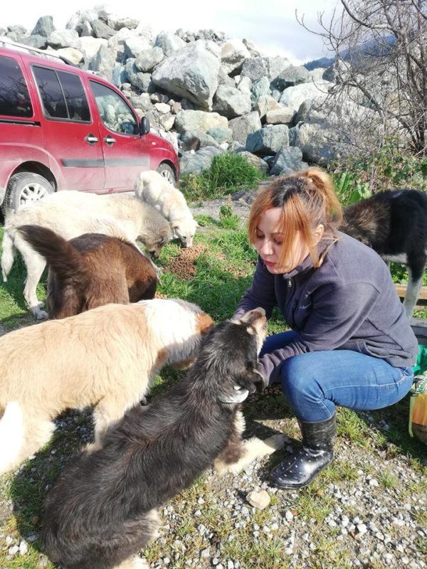 Sebahat is always flocked with hungry pups when she arrives on the scene. (Photo by Sebahat Hanifeoglu)