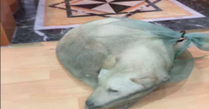 Dog held in plastic bag
