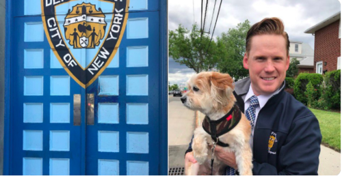 Dog returned to NY humans