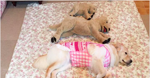 Dogs and stuffed animals