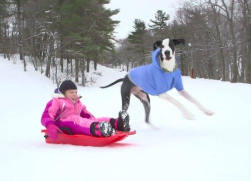 George and Bella sledding