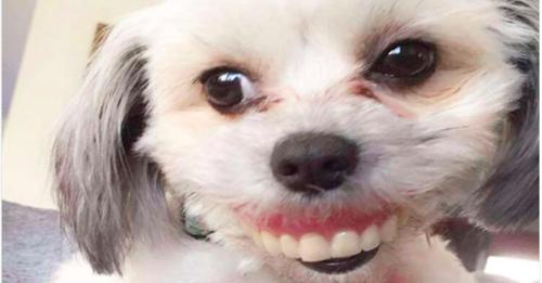 Maggie wearing dentures