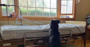 Moose sitting next to hospital bed