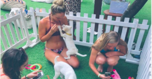 Puppy therapy in Bali