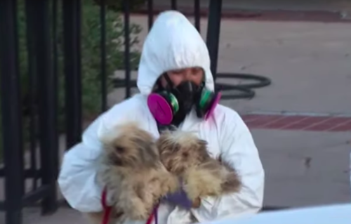Small dogs rescued from home