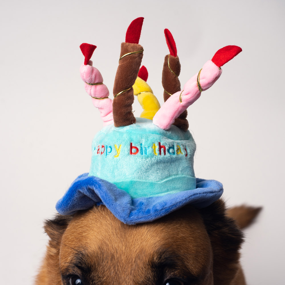 Astounding Blue Happy Birthday Cake Candles Dog Hat Funny Birthday Cards Online Aboleapandamsfinfo