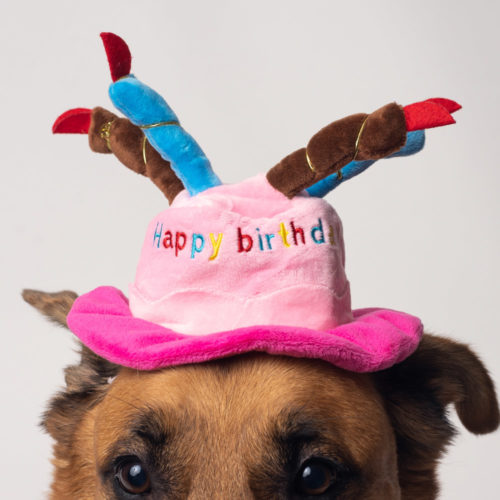 Pink Happy Birthday Cake & Candles Dog Hat