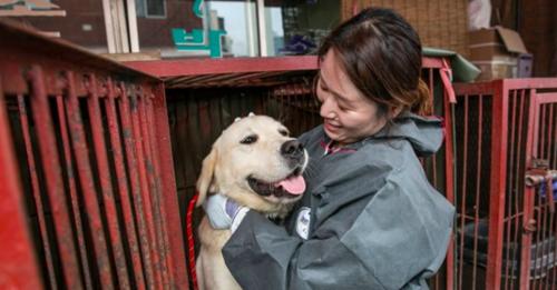 Dog rescued at Gupo