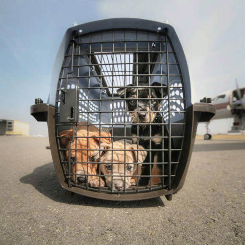 GreaterGood.org Donation – Emergency Flight to Save 150 Pets