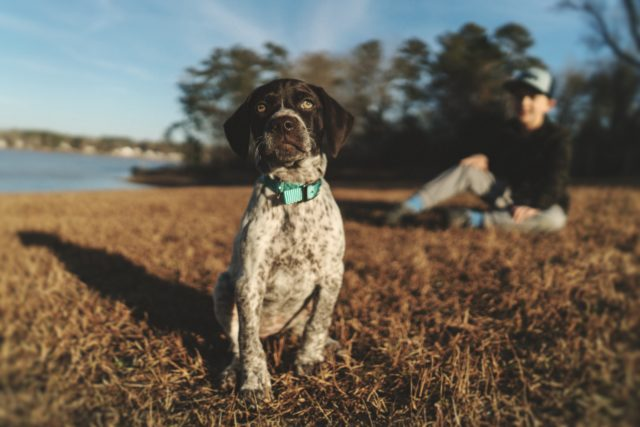 natural flea and tick control is safer for family