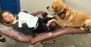 dental therapy dog
