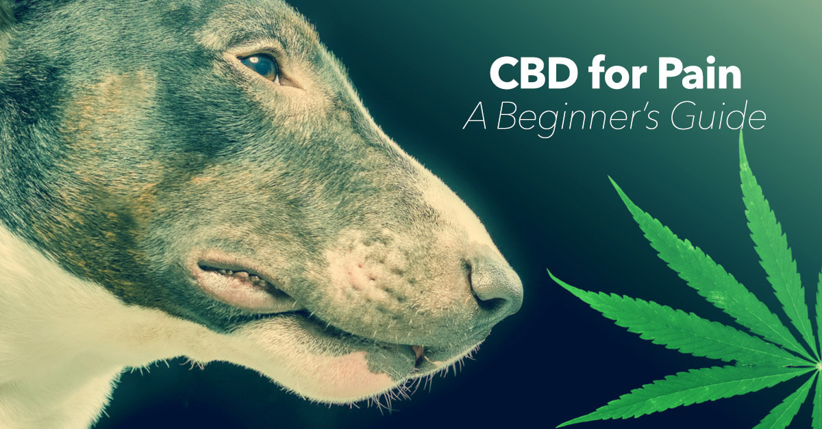 CBD for Pain Management in Dogs: A Beginner's Guide