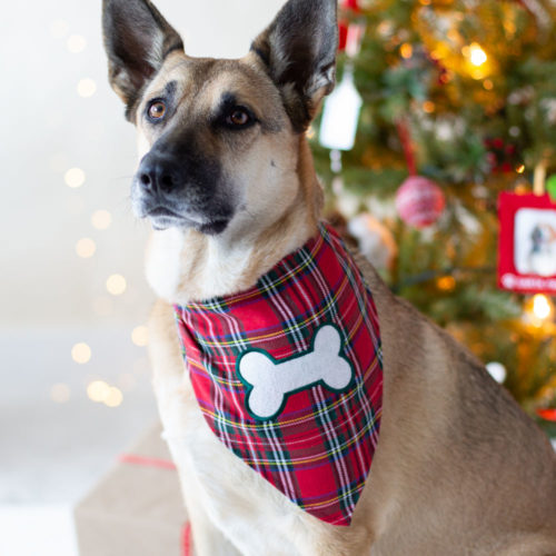 Classic Holiday Plaid Bandana