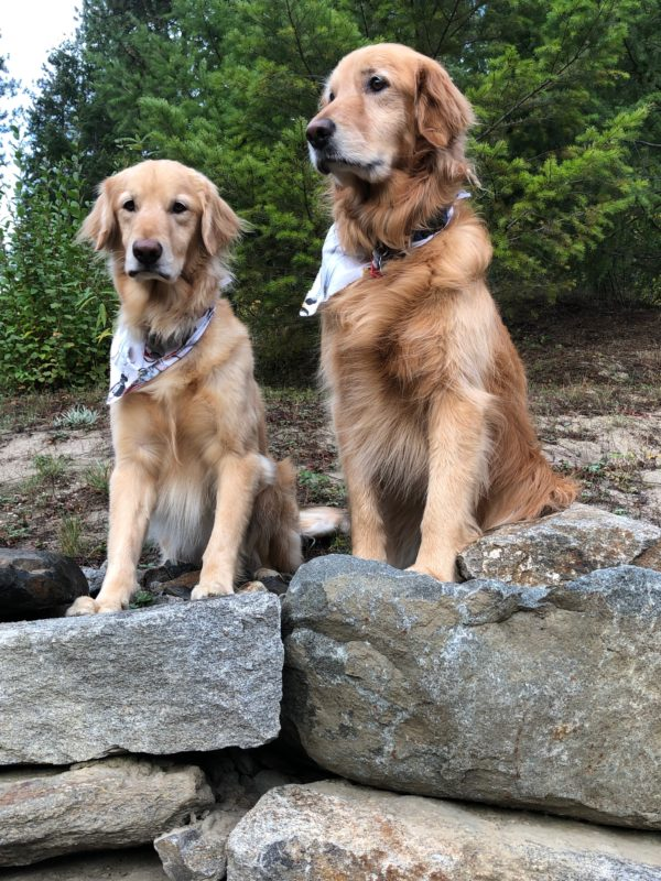 dog's hiking