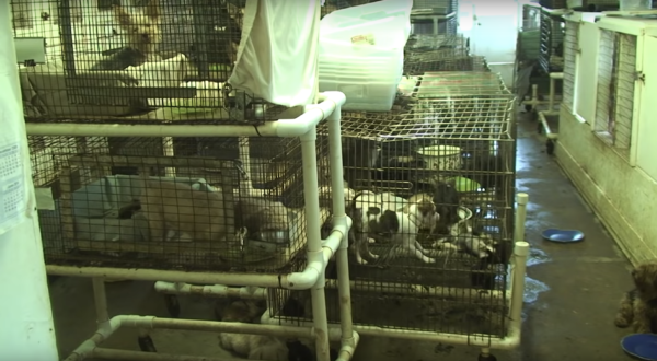 How puppy mills stay in business