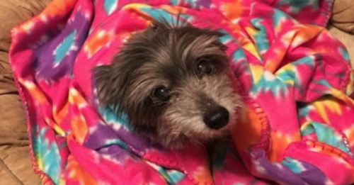 Woman Unknowingly Rescues Senior Dog She Lost 11 Year Prior