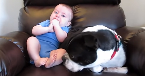 iheartdogs com/wp-content/uploads/2019/09/poopbaby
