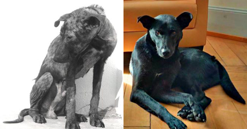 Starving Dog's Incredible Recovery Reveals His Beauty