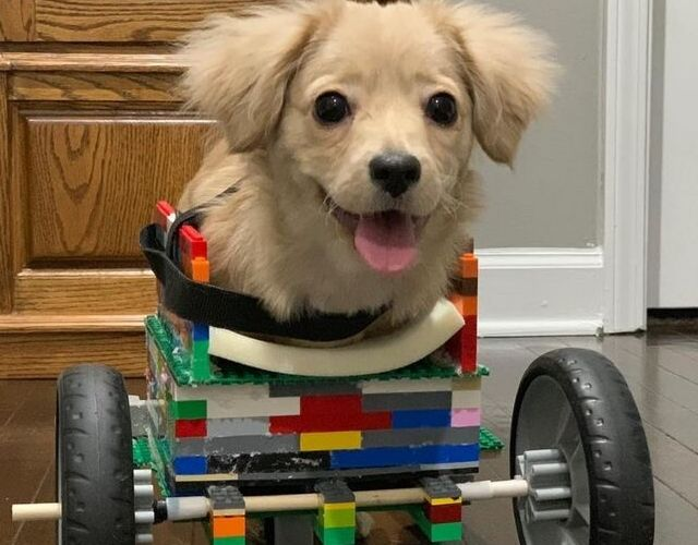 Daisy wheelchair