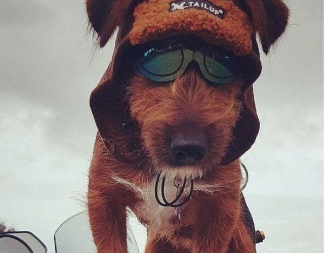Jack Biker Dog