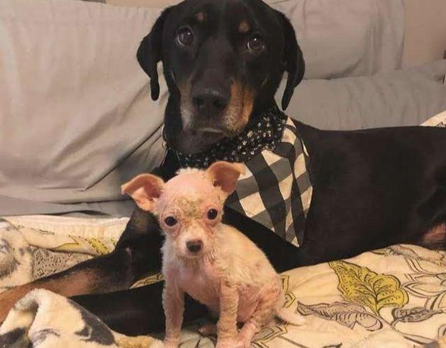 pippa puppy