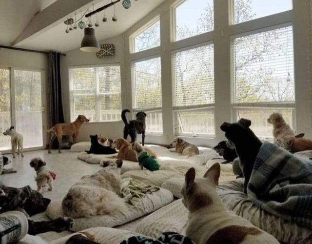 Senior Dog Home